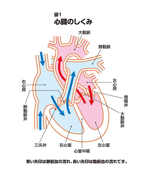 うっ血 性 心不全 症状 うっ血性心不全の症状・原因・治療方法とは?